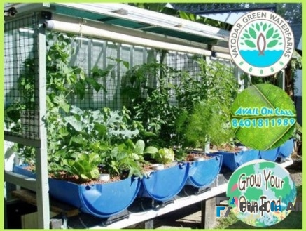 Hydroponics and Aquaponics System to Grow your own food